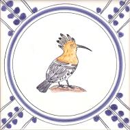 18 Hoopoe