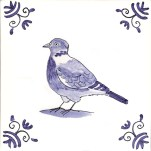 37 wood pigeon