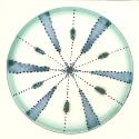 Diatom 10
