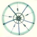 Diatom 19