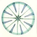 Diatom 20