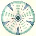 Diatom 8
