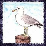 Seabird 10