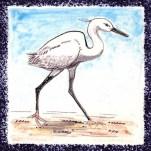 Seabird 11