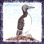 Seabird 12