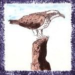 Seabird 16