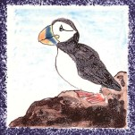 Seabird 3