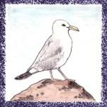 Seabird 4