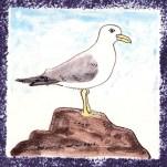 Seabird 6