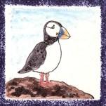 Seabird 7