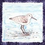 Seabird 9
