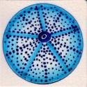 urchin tile 11