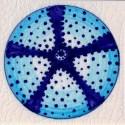 urchin tile 9