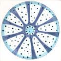 Diatom 22
