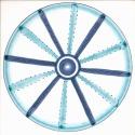 Diatom 31