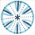 Diatom 33