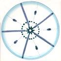 Diatom 7