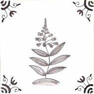 Wildflower 18 Rosebay Willowherb
