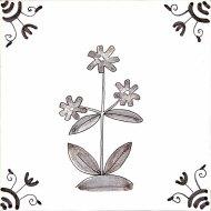 Wildflower 2 Campion
