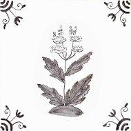 Wildflower 20 Meadowsweet