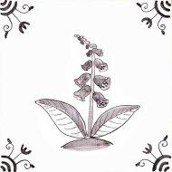 Wildflower 28 Foxglove