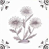 Wildflower 29 Oxeye Daisy