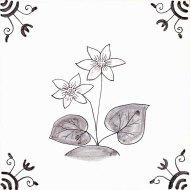Wildflower 30 Marsh Marigold