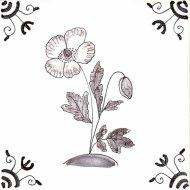 Wildflower 4 Welsh Poppy