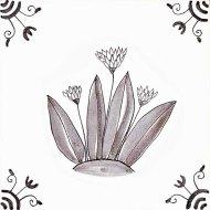 Wildflower 8 Wild Garlic