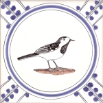 14 Pied Wagtail