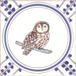 19 Tawny Owl