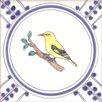 28 Golden Oriole