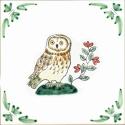 1 owl