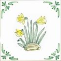 29 daffodil