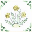 8 dandelion